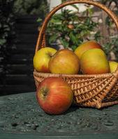Rustic organic apples in a wicker basket on a green garden table