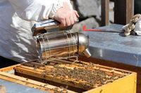 Imker mit Rauchpfeiffe am geöffneten Bienenkasten