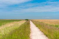 Rad- und Wanderweg in der Nähe von Ahrenshoop auf der Halbinsel Fischland - Darß