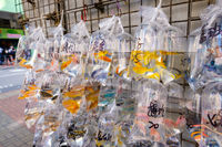 goldfish and other colorful fishes in plastic bag on pet market