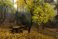 Autumn landscape with trees and yellow leaves on the ground after rain
