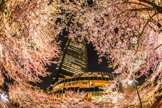 Sakura and Tokyo Midtown