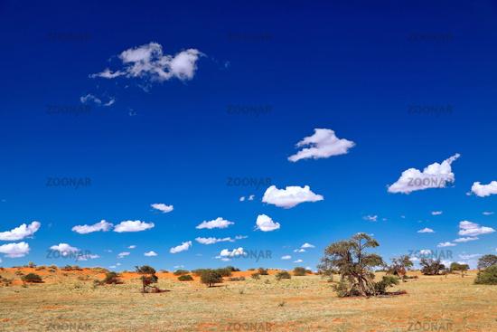 Landschaft im Kgalagadi-Transfrontier-Nationalpark, Südafrika   Landscape at Kgalagadi Transfrontier National Park, South Africa