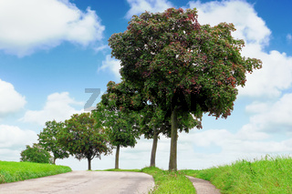 Curved road, green field, blue sky and trees. Travel, journey and countryside concept.