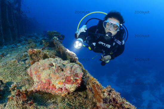 Synanceia verrucosa, Steinfisch und Taucher am Schiffswrack MV Kudhi Maa, Reef Stonefish and scuba diver on shipwreck MV Kudhi Maa