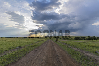 Road in savannah landscape