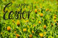 Yellow Flower Meadow, Calligraphy Happy Easter, Spring Season
