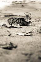 beautiful cat sitting in the street