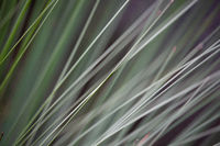 Moving grass strands abstract