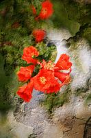 Double exposure of floral objects