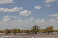Landschaft, Etosha-Nationalpark