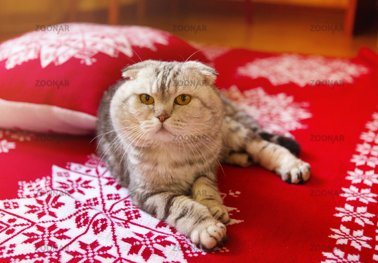 Cat lying on bed with red Christmas blanket