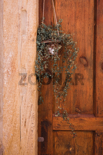 Hanging green plant outside a wooden door