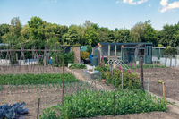 Dutch allotment garden with vegetables, bean stakes and shed