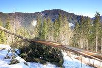 abgebrochene Bäume durch Schneedruck