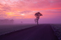 Lonely tree on the empty road in the mist.