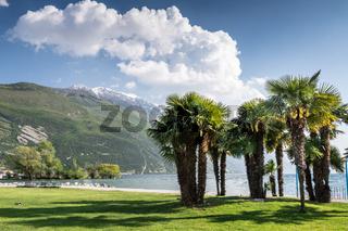 Palm Trees at Lake Garda