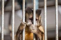 kleiner Affe hinter Gittern