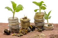 Kleine Pflanzen wachsen aus gestapelten Geld Münzen auf einem Sandstein mit toten Insekten