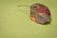 dried leaf on handmade paper