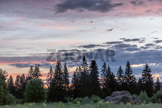 morning with a bright pink sky over the forest