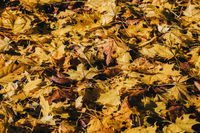 Natural autumn pattern background