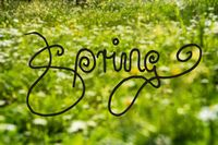 Daisy And Yellow Flower Meadow, Calligraphy Spring