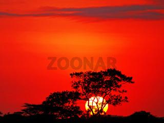 Sonnenaufgang im Kruger National Park, SA