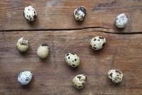 many quail eggs