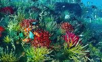 Underwater paradise on reef 3d rendering