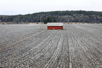 Red Barn in Winter Field