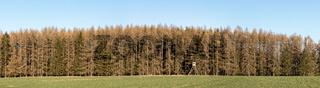 Trockenheit Borkenkäfer Waldsterben im Harz