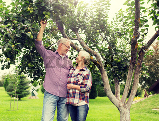 senior couple with apple tree at summer garden