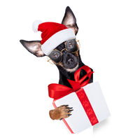 santa claus dog on christmas holidays
