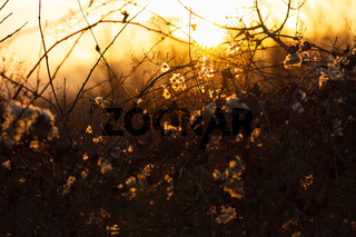 abstract dry branches of grass or shrubs in autumn or spring on a background of orange and yellow colored sunset. beautiful nature scenery. evening landscapes. copy space text