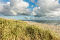 Beach with sand dunes and marram grass, blue sky and clouds in soft evening sunset light. Hvidbjerg Strand, Blavand, North Sea, Denmark.