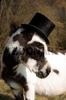 Esel mit Hut