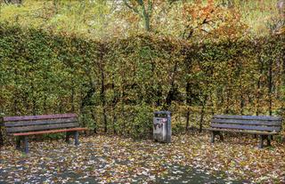 Chemnitzer Schlossteichpark - Die Baenke vor der Hecke