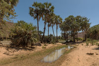 Landscape along the Kunene River in the north of Namibia