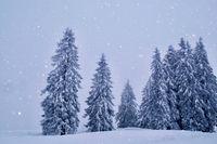 Weisse Weihnacht Landschaft bei Schneefall im Schwarzwald