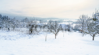 cold winter snow scenery