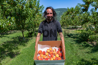 caucasian man in the peaches orchard