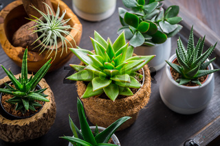 Collection of succulent plants for home deco. Gardening idea for stone garten.