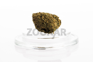 Cannabis sativa flower buds, isolated on white background