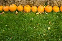 Halloween orange pumpkins on meadow