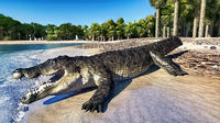 The crocodile rests by the river 3d rendering
