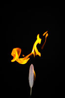 Feather and Flame #5