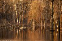 Am Ufer des Flusses Frühling.