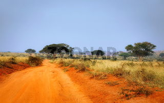 Piste im Murchison Falls Nationalpark Uganda | Sand road through Murchison Falls National Park Uganda