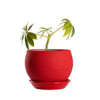 Small green flowerpot in red pot isolated on white background. Object isolated on white background with clipping path